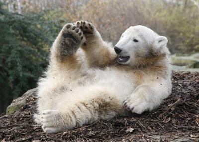 """Knut"""