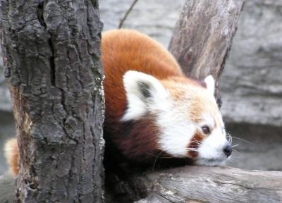 panda-klein.jpg