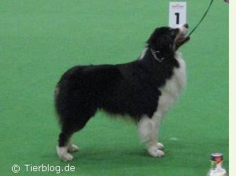 hunde11.jpg