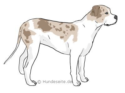 catahoula-bulldog.jpg