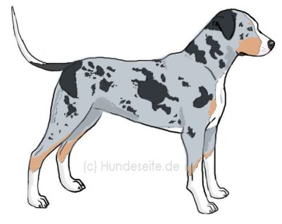 catahoula-leopard-dog2.jpg